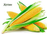 Семена кукурузы Хотын ЮгАгроСервис простой среднеранний гибрид
