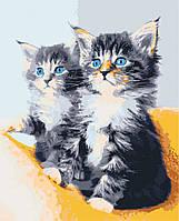 """Картина по номерам. Art Craft """"Голубоглазые котята"""" 40*50 см 11617-AC"""