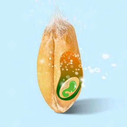 Пророщенные зерна Добра Їжа (150 гр), фото 2