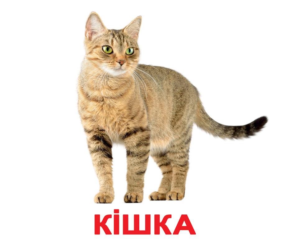 Картки Домана Свійські тварини з фактами 20 карток на українській мові