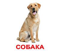 Картки Домана Свійські тварини з фактами 20 карток на українській мові, фото 2
