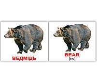 Картки Домана Дикі тварини/Wild animals, 40 карток, фото 2