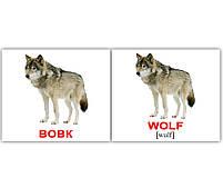 Картки Домана Дикі тварини/Wild animals, 40 карток, фото 3