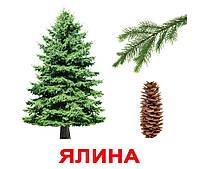 Картки Домана Дерева з фактами 20 карток Ламінація на українській мові, фото 3