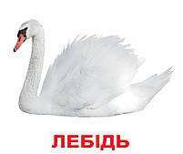 Картки Домана Птахи з фактами 20 карток Ламінація на українській мові, фото 2