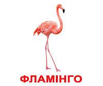 Картки Домана Птахи з фактами 20 карток Ламінація на українській мові, фото 3