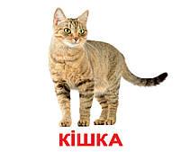 Картки Домана Свійські тварини з фактами 20 карток Ламінація на українській мові, фото 2