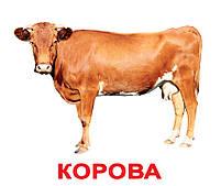 Картки Домана Свійські тварини з фактами 20 карток Ламінація на українській мові, фото 3