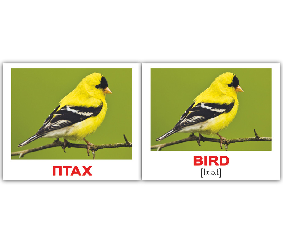 Картки Домана Природа/Nature 40 міні-карток укр-англ