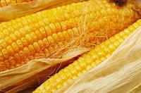 Гибрид кукурузы АС 13320