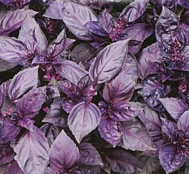 Базилик Фиолетовый Рози 0,3 гр Inter Seeds