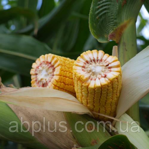 Семена кукурузы Mas 45.М