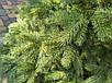 """Литая елка """"Кедр Европейский"""" 2.10м // Лита ялинка / Ель / ёлка / сосна, фото 6"""