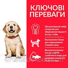 HILL'S SCIENCE PLAN Puppy Large Breed Сухий Корм для Собак з Куркою - 800 г, фото 3
