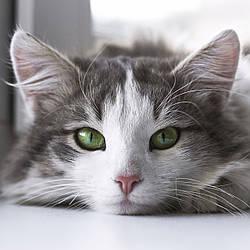 Где купить товары для кошек в Харькове?