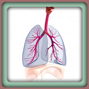Очищение органов дыхания