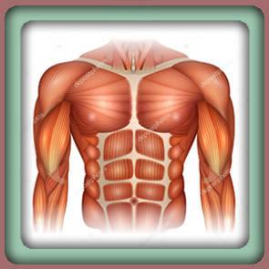 Для мышечной ткани
