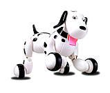 Собачка робот игрушка на р/у Happy Smart Dog Интерактивная  18 функций свет звук, фото 2