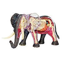 Объемная анатомическая модель 4D Master Слон