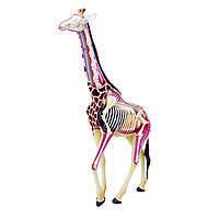 Объемная анатомическая модель 4D Master Жираф