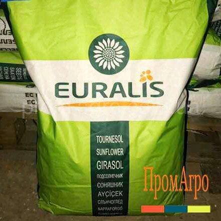 Семена подсолнечника Euralis ЕС Агрополис КЛП под Евролайтинг плюс посевной гибрид подсолнуха Евралис ЕС