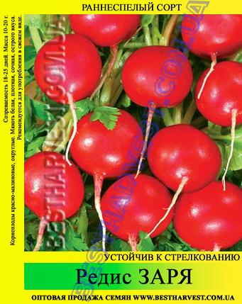Семена редиса Заря 1 кг, фото 2