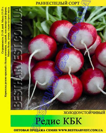 Семена редиса КБК 1 кг, фото 2