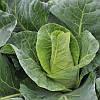Семена капусты Рубени F1 / Rubeni F1, 2500 семян