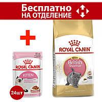 Royal Canin Kitten British Shorthair 10кг - корм для кошенят британської кішки короткошерстной