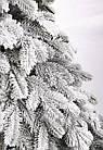 Елка Ковалевская 1.8 м заснеженная искусственная литая с подставкой, новогодняя ель литая, фото 4