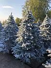 Елка Ковалевская 1.8 м заснеженная искусственная литая с подставкой, новогодняя ель литая, фото 6