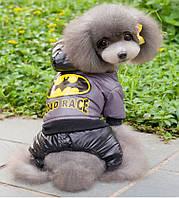 Комбинезон для собак BatMan. Одежда для собак.