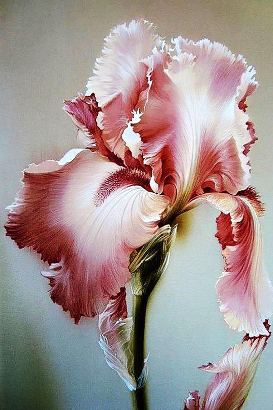 Алмазная вышивка мозаика Чарівний діамант Розовый ирис КДИ-0383 20х30см 21цветов квадратные полная