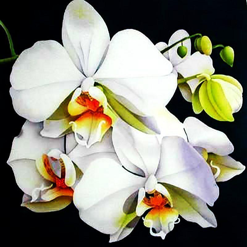 Алмазная вышивка мозаика Чарівний діамант Белая орхидея-3 КДИ-0505 40х40см 18цветов квадратные полная