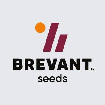 Семена кукурузы BREVANT