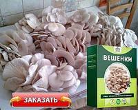 Чудо грибница, готовый засеянный мицелий для выращивания грибов дома 6 видов
