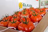 Семена томата Маско F1 (250 сем.) Clause, фото 3