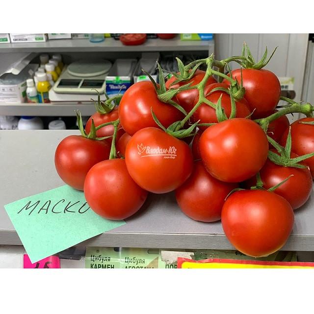 Семена томата Маско F1 (250 сем.) Clause