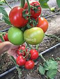 Семена томата Маско F1 (250 сем.) Clause, фото 2