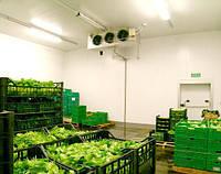 Теплоизоляция пенополиуретаном (ППУ) овощехранилищ, фруктохранилищ.