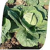 Семена капусты б/к Рапидион F1 (2500 сем.), фото 2