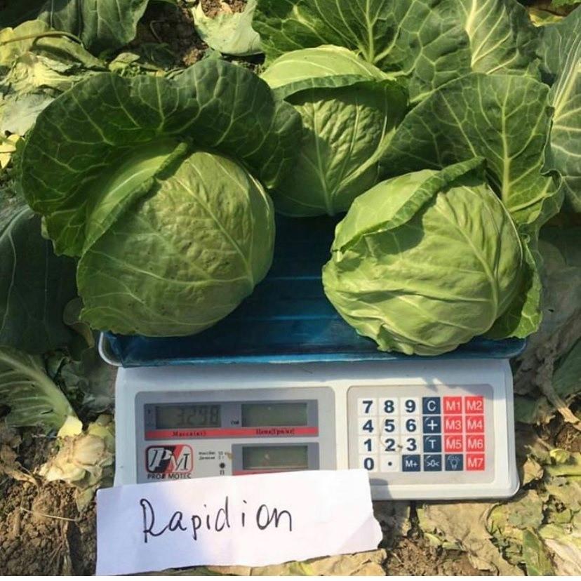 Семена капусты б/к Рапидион F1 (2500 сем.)
