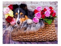 """Картина по номерам """"Колли в цветах"""" 40*50см,крас.-акрил,кисть-3шт.(1*5)"""