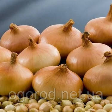 Лук-севок(тыканка) Штутгартер Ризен TOP Onionsets Голландия 100 г