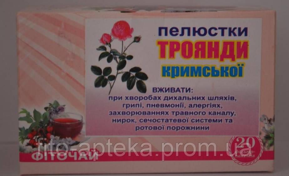 Роза чайная крымская № 20