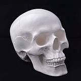 Череп человека декоративный в натуральную величину белый из гипса, фото 2