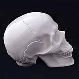 Череп человека декоративный в натуральную величину белый из гипса, фото 3