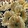 Цветок искуственный гербера Jolipa, фото 2