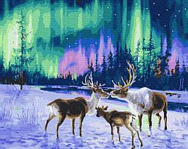 Картина за Номерами Північне сяйво і олені 40х50см RainbowArt