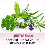 HEATHER - Вереск (№ 14), фото 2